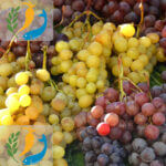 Best Nutritional Benefits Of Grapes