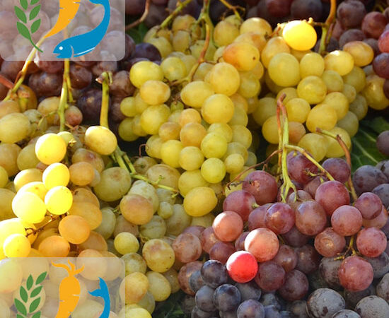 Nutritional Benefits Of Grapes