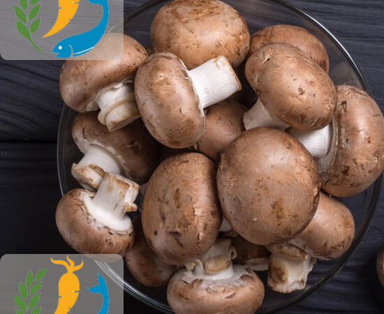 Nutrition In Mushrooms