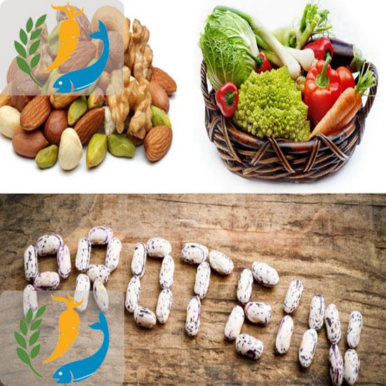 Protein Rich Foods | Foods Rich in Protein